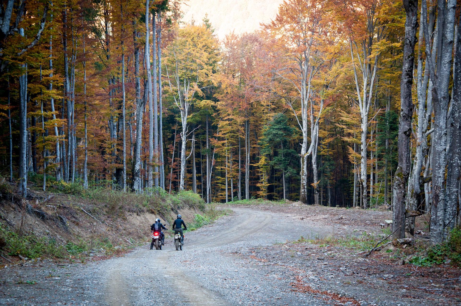 Fall, Foliage, Motorcycle